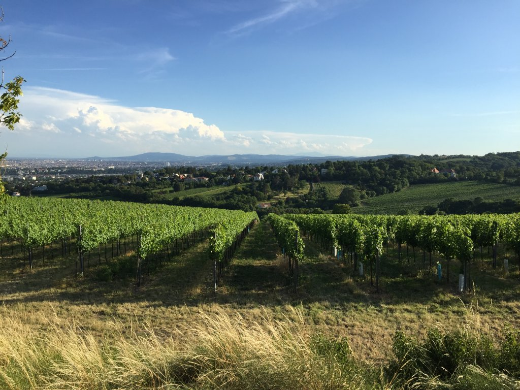 What to do for 3 days in Vienna Hiking Vineyards