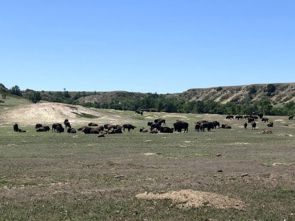 Theodore Roosevelt National Park Wildlife